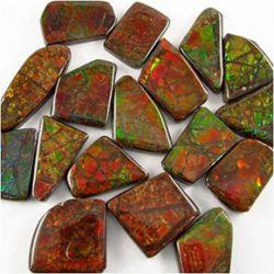Ammolite7